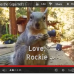 Rockie the squirrel – our plant-based fitness mascot – releases her first music video