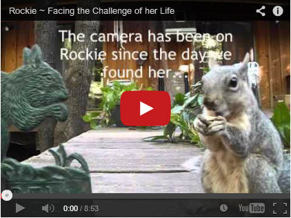 rockie challenge of life video