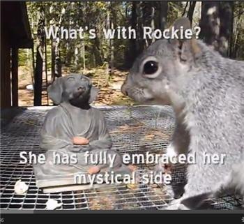 rockie_goes_zen